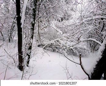Winter forest after snowfall. Winter landscape in nature