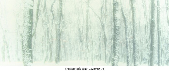 Winter forest background image with negative space.Obscured oak trees covered with fresh snow and rime.fog, gloomy mood.