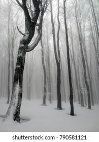 Winter forest in Bieszczady mountain, Poland