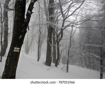 Winter forest in Bieszczady, Poland.