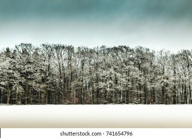 Winter forest with blue sky