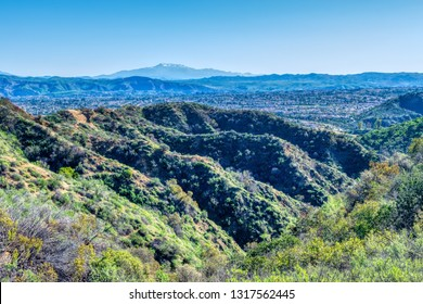 Winter forest in California suburban town below and room for copy text in blue sky