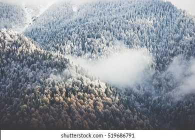 Winter Forest clouds Landscape aerial view trees background Travel serene scenery