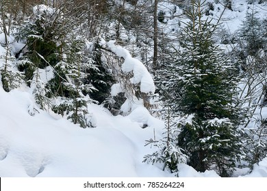 Winter forest covered by fresh white snow, Tyrol Alps
