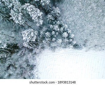 Winter. Forest covered by the snow.