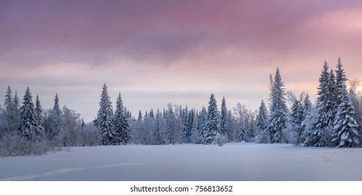 Winter forest covered by snow at sunset, panorama view in Ural mountains, Russia