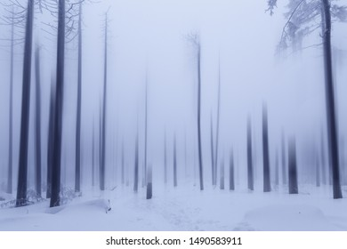 Winter forest early in the Morning. National Park harzmountains