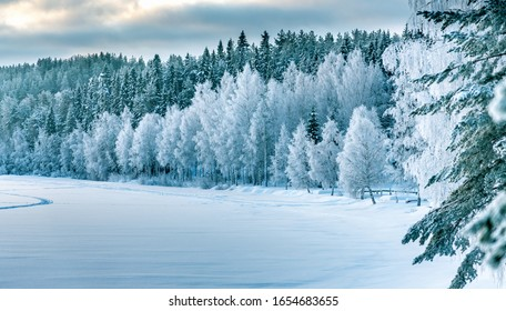 Winter forest edge at frozen river: typical Northern Sweden landscape - birch and spruce tree covered by hoarfrost - very cold day, Lappland, Sweden