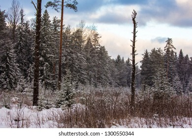 Winter forest field at morning