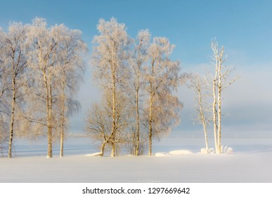 Winter forest in fog. Leningrad region. Russia