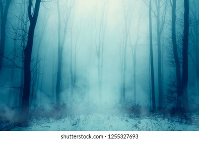 winter forest in fog and snow