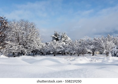 winter forest with fresh snow cover on trees and nice sky