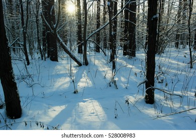 Winter forest in a frosty sunny day