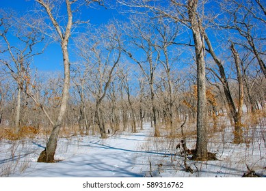 Winter forest and frozen mountains on cold winter day