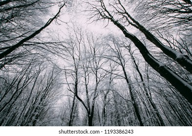 winter forest with frozen trees, view toward sky