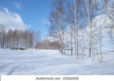 winter forest in Furano, Hokaido, Japan