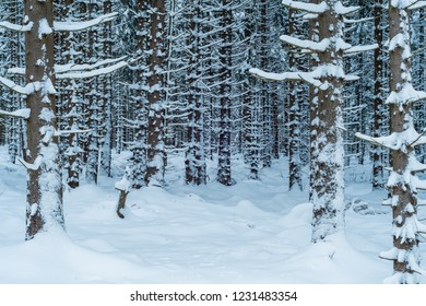 Winter Forest in the Harz Mountains