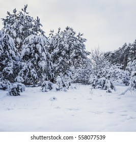 Winter forest with heavy snow