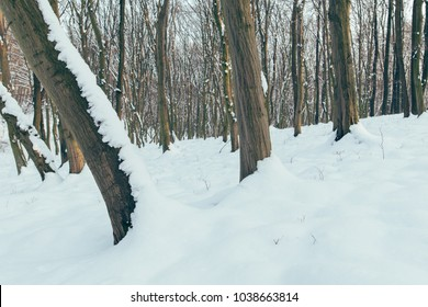 Winter forest, Vértes hegység, Hungary