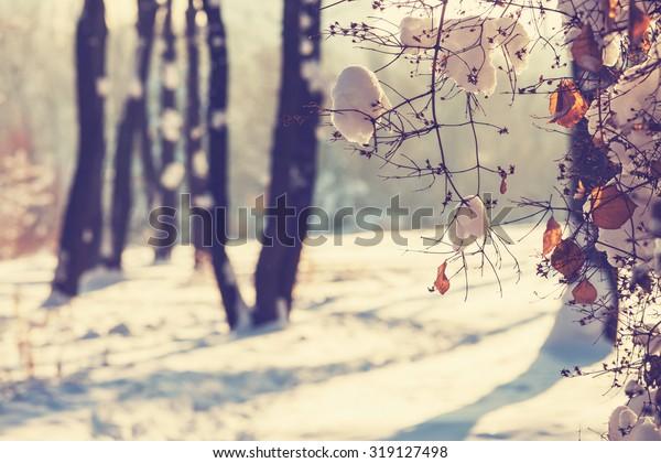 Winter forest. Instagram filter.