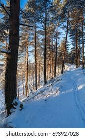 Winter forest, Lahti, Finland
