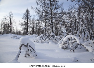 winter forest landscape in the Artic circle
