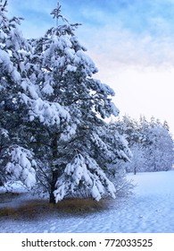 Winter forest landscape on a snowy December day. Beautiful winter against the blue sky.