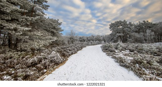 Winter forest landscape panorama with snow and hoarfrost on grass and trees in Baggelhuizen nature reserve in Assen, Drenthe