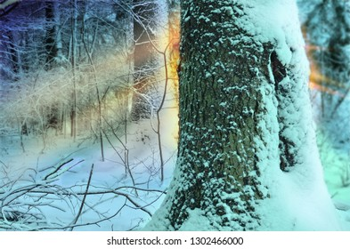 Winter forest landscape with snowy trees and sun rays