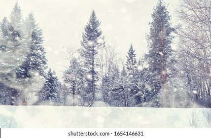 Winter forest landscape. Tall trees under snow cover. January frosty day in park.