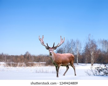 winter forest landscape witch cute deer