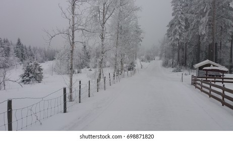 The winter forest in Lillehammer, Norway