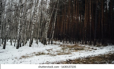 Winter in the forest. Winter mixed forest covered by snow hoarfrost. Wintry landscape.