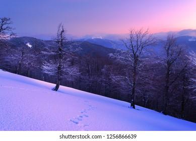 Winter forest in mountains. Carpathians, Ukraine