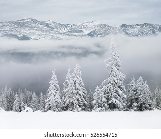 Winter forest on background of snowy mountains
