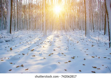 Winter forest on sun and tree in snow
