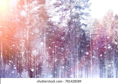 Winter forest on a sunny day. Landscape in the forest on a snowy morning. New Year winter forest.