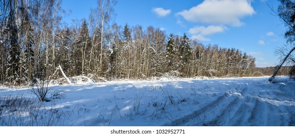 Winter forest, panorama. Sunny February landscape, wood in the middle of Russia.