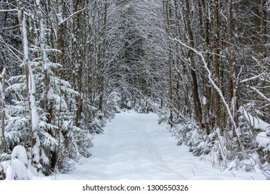 Winter forest path way road