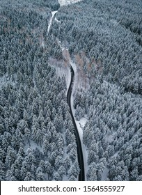 Winter forest and road from above