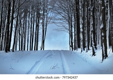 winter forest road disappears into the light nowhere