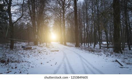 winter forest road landscape background