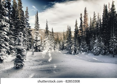 Winter forest in Rocky mountains national park, colorado