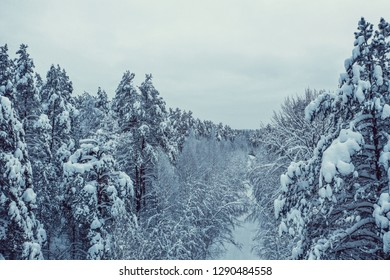 Winter forest of Russia