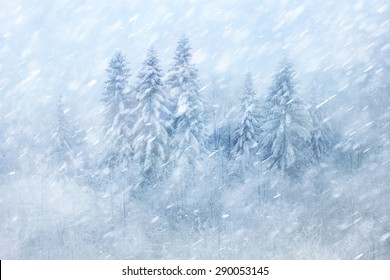 Winter forest scene with snowfall. Beautiful heavy snowfall woodland landscape background.