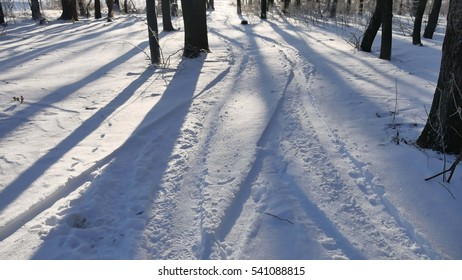 winter forest shade from the sun by trees beautiful nature landscape