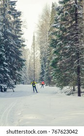 winter forest, skiers for a walk in the woods