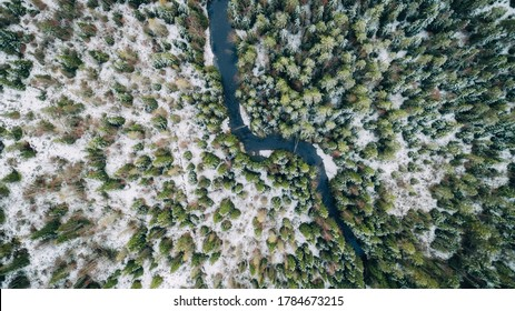 Winter forest with small curving river top down drone aerial view. Winter season.