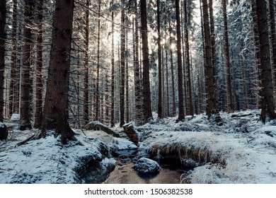 Winter forest and a small stream