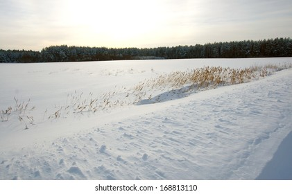 Winter forest with snow and dry grass on the field
